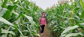 Thanh Hóa: 29 mô hình khuyến nông thành công vượt mức yêu cầu