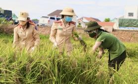 Công an Quảng Bình xuống đồng gặt lúa giúp dân tránh dịch Covid - 19