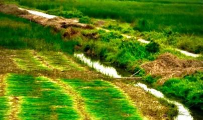 Thương hiệu chiếu cói Nga Sơn: Dệt tiếng thơm cho vùng đất duyên hải xứ Thanh