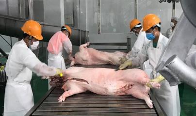 Thị trường ngày 14/6: Giá lợn hơi tăng nhẹ tại một số địa phương