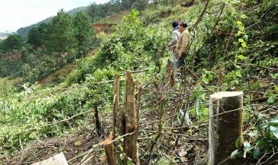 Phạt 200 triệu đồng nhóm đối tượng phá gần 4.000m2 rừng phòng hộ Đà Lạt