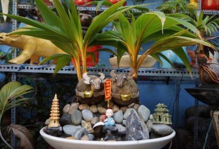 Độc đáo dừa bonsai, trâu vàng 'cõng' quất chơi Tết