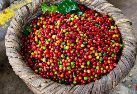 Thị trường cà phê và hồ tiêu hôm nay 18/1 giữ giá ổn định