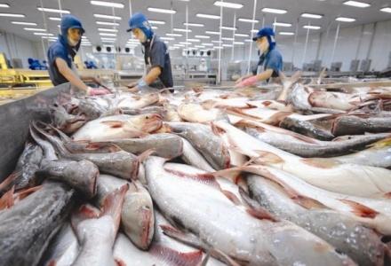 Xuất khẩu cá tra dần khởi sắc trở lại